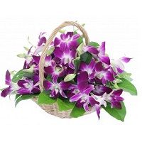 Orchids basket